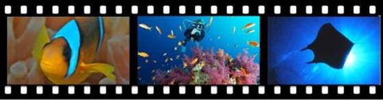 UnterwasserFestival