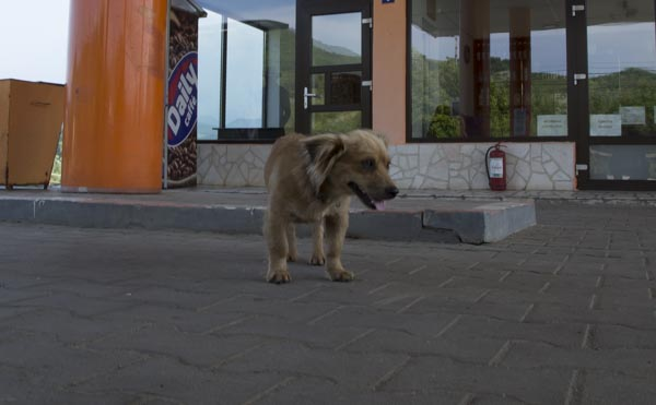 Hund an Tankstelle