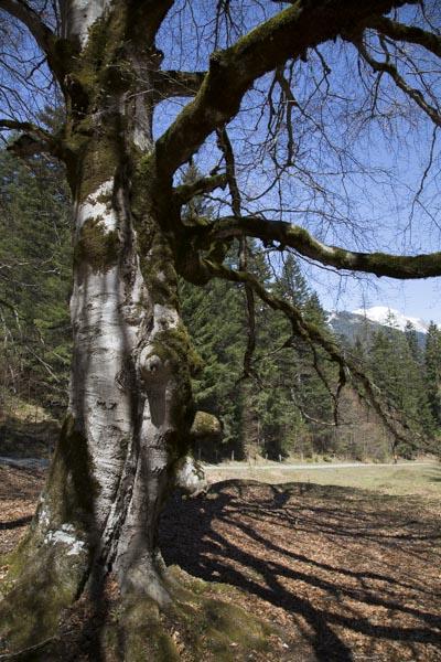Fotografischer Rückblick, Kunkelspass, Baum