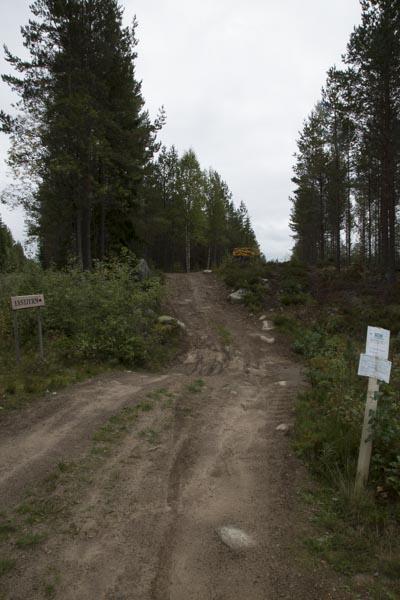 Waldwege in Norwegen